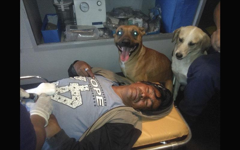 Chimbote: dos perritos acompañan a su amo herido hasta el hospital