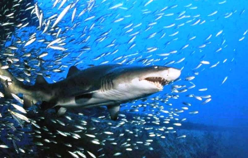 La columna del d a los peces y el tibur n radio rsd for Construccion de tanques para peces