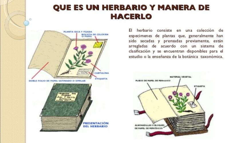 Audio del color de la naturaleza el herbario radio for Botanica general pdf