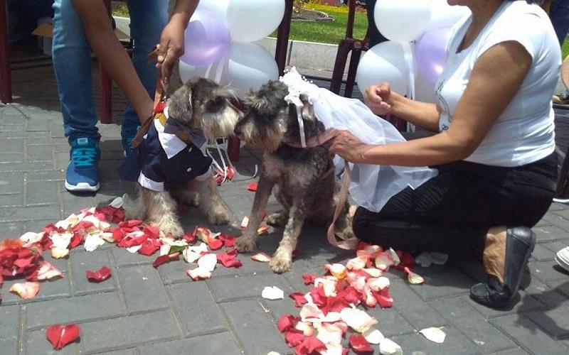 Acta De Matrimonio Simbolico : Chimbote realizan matrimonio canino para sensibilizar en