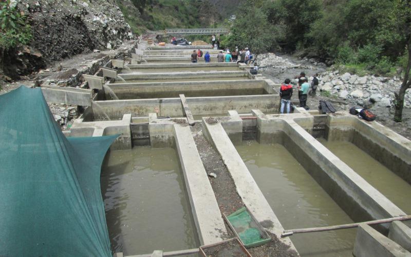 Fotos ncash huaico arrasa con unas 400 mil truchas en for Estanque de truchas