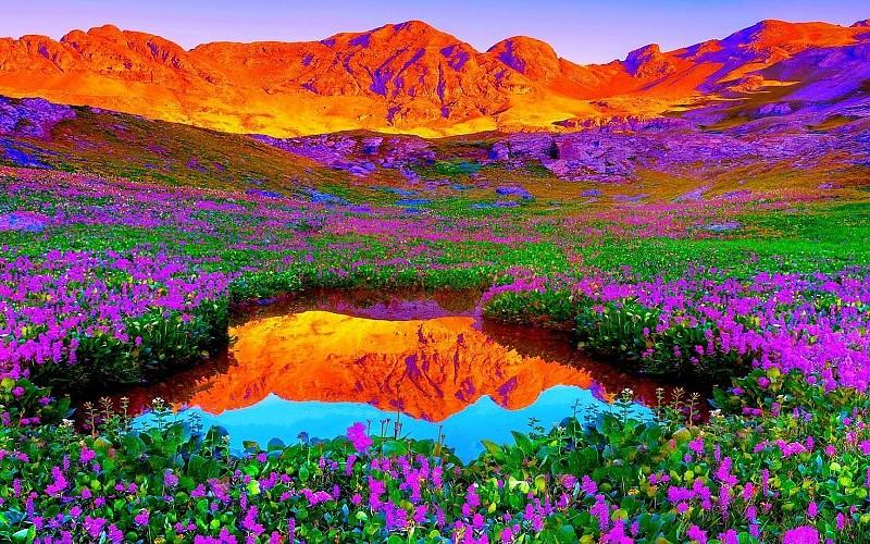 ...El color de la naturaleza... - Página 2 Wallpaper-colors-of-nature-wallpaper-2-pics-310464