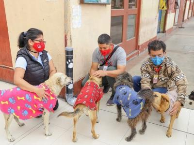 comederos_para_perros